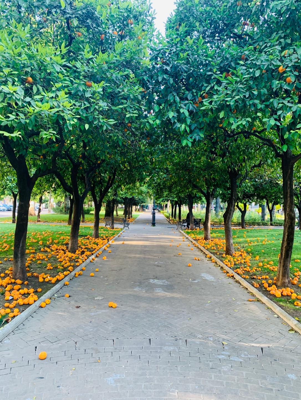 Kordoba Jardin del Duque de Rivas ileduszazapragnie blog